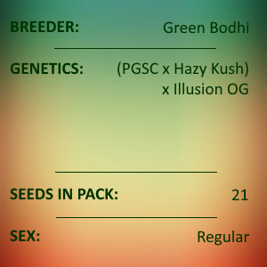 Green Bodhi - Hazy Girl x Illusion OG