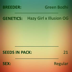 Green Bodhi - Hazy Girl x Illusion OG