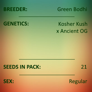 Green Bodhi - Kosher Kush x Ancient OG