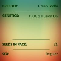Green Bodhi - LSOG x Illusion OG