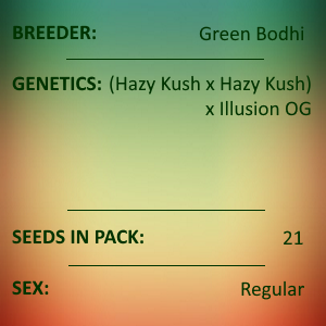 Green Bodhi - Mystery Haze x Illusion OG