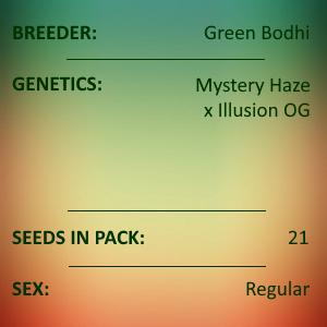 Green Bodhi - Mystery Haze x Illusion OG
