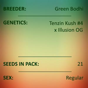 Green Bodhi - Tenzin Kush #4 x Illusion OG