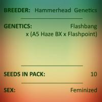 Hammerhead Genetics - Flashbang x A5 Haze x Flashbang