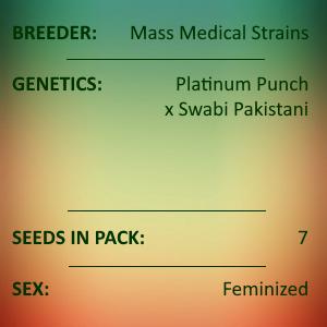 Mass Medical Strains - Platinum Swabi Punch