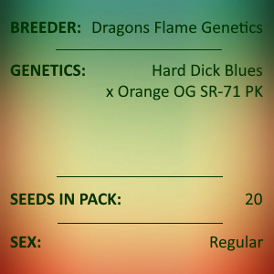 Dragons Flame Genetics - Dragon's Stash F3