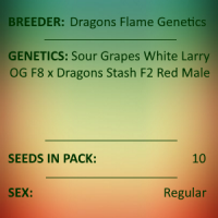 Dragons Flame Genetics - White Larry Dragon