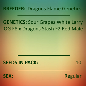 Dragons Flame Genetics - White Larry Dragon
