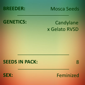 Mosca Seeds - Dayger