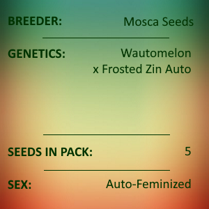 Mosca Seeds - Frosted Watermelon