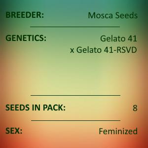 Mosca Seeds - Gelato S1