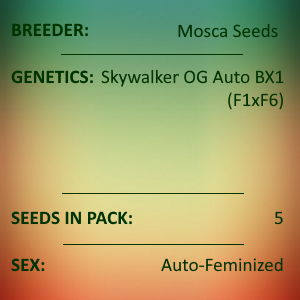 Mosca Seeds - Skywalker OG Auto BX 1