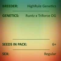 HighRule Genetics - Zelda Runtz
