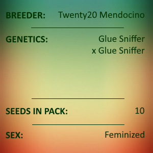 Twenty20 Mendocino - Glue Sniffer S1
