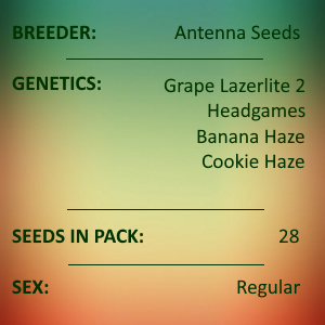 Antenna Seeds - Assorted Haze Collection 20212