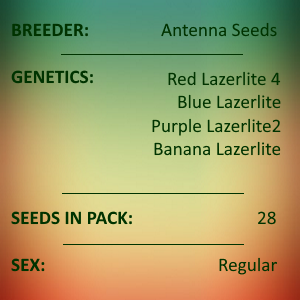 Antenna Seeds - Assorted Red Lazerlite Collection B 2021
