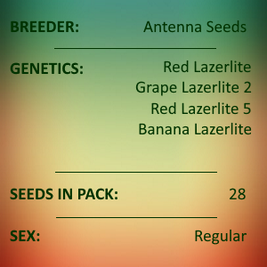 Antenna Seeds - Assorted Red Lazerlite Collection C 2021