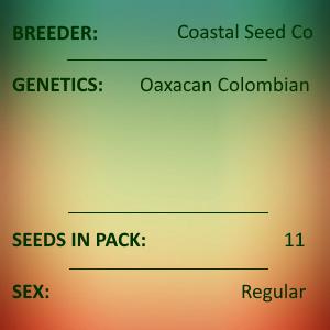 Coastal Seed Co - Oaxacan Colombian
