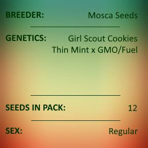 Mosca Seeds - Kringe