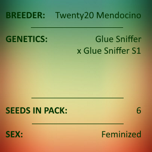 Twenty20 Mendocino - Glue Sniffer Feminized 6 seeds