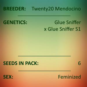 Twenty20 Mendocino - Glue Sniffer Feminized 6 seeds