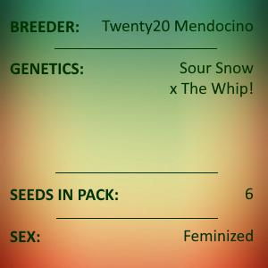Twenty20 Mendocino - MMXX Feminized 6 seeds