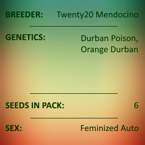 Twenty20 Mendocino - Durban Sunrise