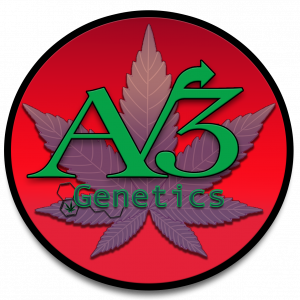 AV3 Genetics - Cannabis Seed Breeder, Cannabis Genetics