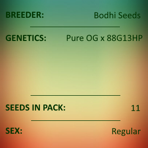 Bodhi Seeds - Imperial Majesty