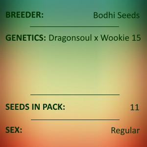 Bodhi Seeds - Rainbow Serpent