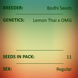 Bodhi Seeds - SS018 Laughing Lemon