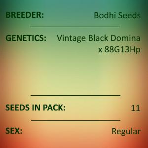 Bodhi Seeds - Snuggle Funk