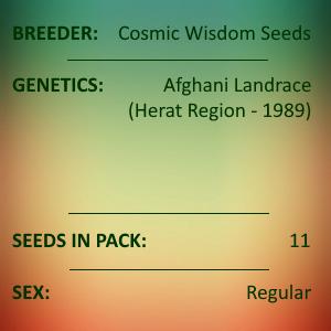Cosmic Wisdom Seeds - Cosmic Afghani