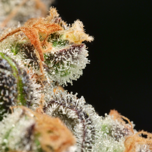 Mass Medical Strains - Anaphylaxis