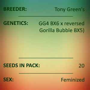 Tony Green - GG4 RIL