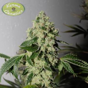 Tony Greens & Karma - Headbanger x Gorilla Bubble BX5