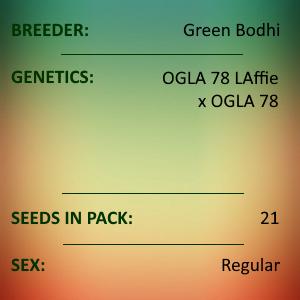 Green Bodhi - OGLA78 BX