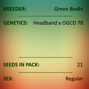 Green Bodhi - Headband x OGCD 78