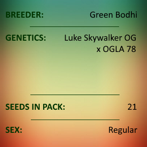 Green Bodhi - Luke Skywalker OG x OGLA78