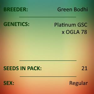 Green Bodhi - Platinum GSC x OGLA78