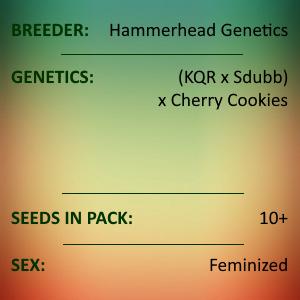 Hammerhead Genetics - (KQR x Sdubb) x Cherry Cookies