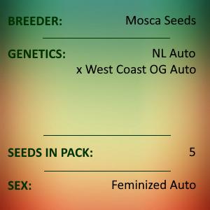 Mosca Seeds - Cantaloupe Kush