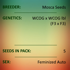 Mosca Seeds - West Coast OG Auto