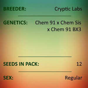 Cryptic Labs - Chem 91 x Chem Sis x Chem 91 BX3