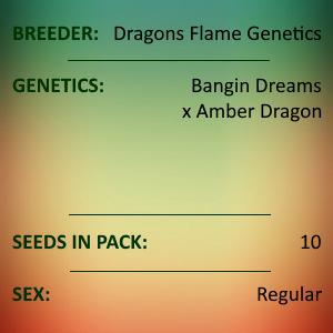 Dragons Flame Genetics - Dragons Dream F1