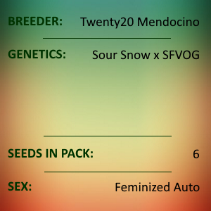 Twenty20 Mendocino - Snow-G Auto
