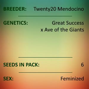 Twenty20 Mendocino - The Great!