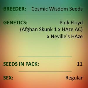 Cosmic Wisdom Seeds - Olskoo Haze