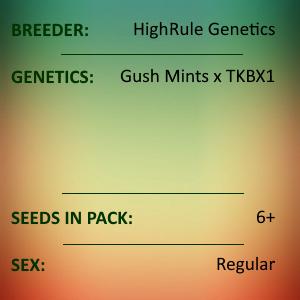HighRule Genetics - Kush Bush