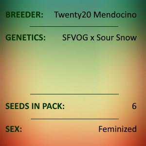 Twenty20 Mendocino - Snow G Photoperiod